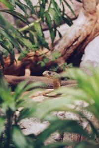 snake in a jungle